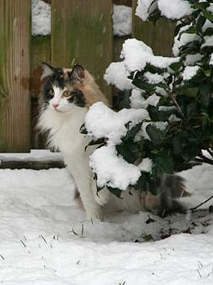 nohra-in-de-sneeuw