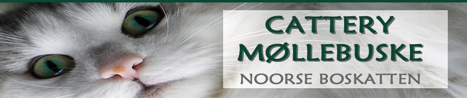 banner-moleboske1