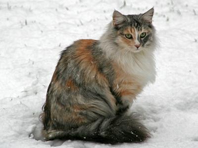esmee-in-de-sneeuw-tuin